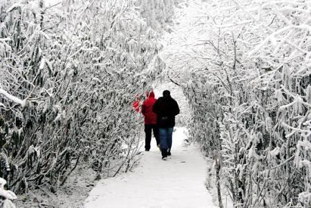 上瘾的.   雪花飞舞的雪山虽然寒冷,但是,总有无数的温泉谷遍布其
