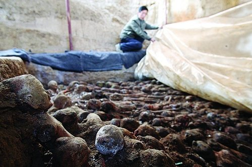 西安发掘西汉将军张安世家族墓 千军战俑守护