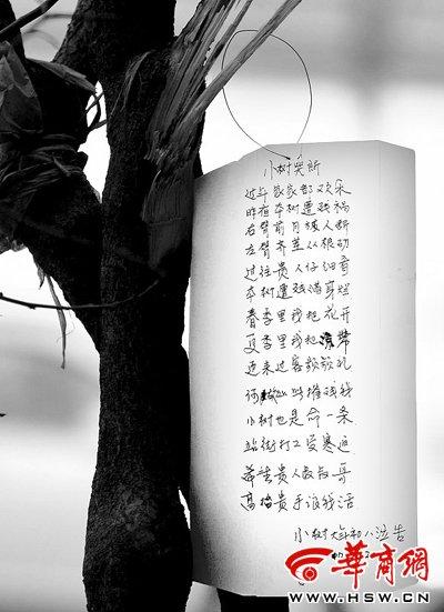 市民挂诗为小树哭诉 直言树是生命也有尊严