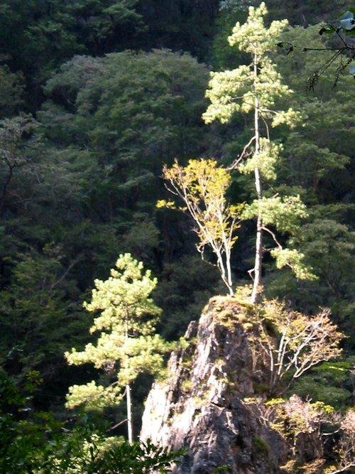 金丝峡旅游风景区