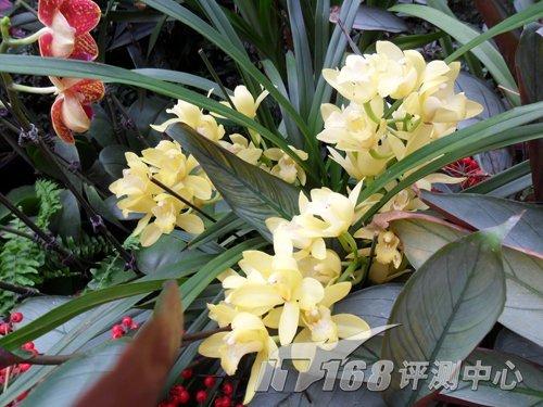 初春踏青赏花去 热卖主流卡片机色彩大比拼_动