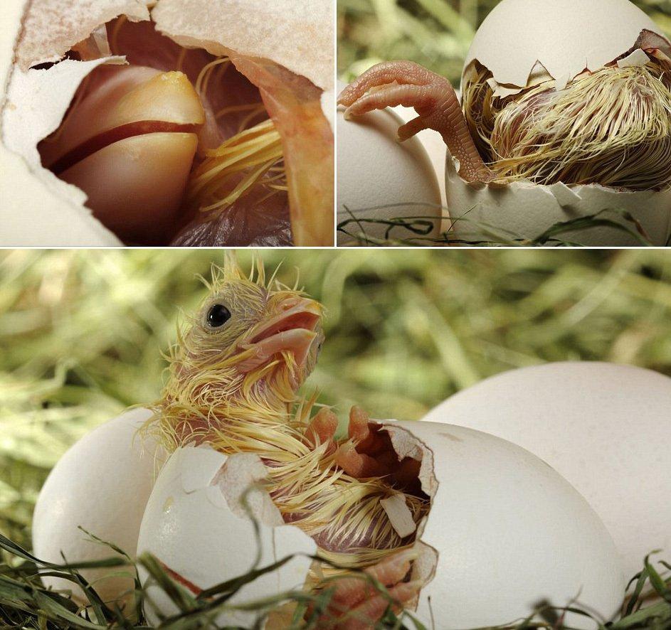 媒体刊登多种动物出壳过程照片(高清组图)