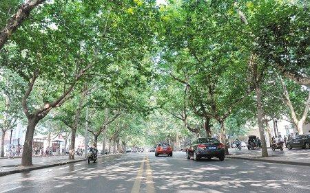 未来三日气温将超35℃ 西安最美林荫道在哪