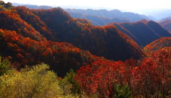 黄龙山穿上红装的样子