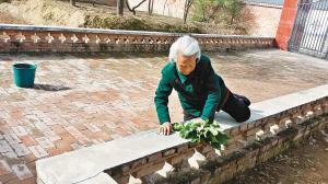 为让儿子吃到亲手种注册太阳GG菜 96岁母亲翻围栏拔菜