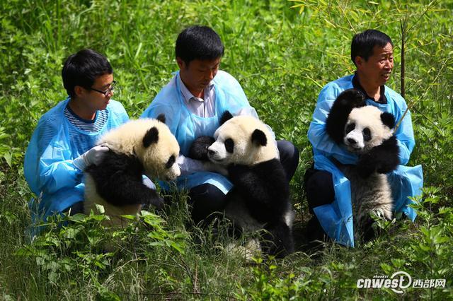 2014年4月30日,陕西省珍稀野生动物抢救饲养研究中心的熊猫饲养员带着