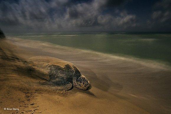 震惊!2017年度野生动植物摄影师大赛获奖作品