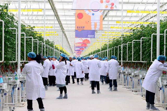 枝纯Candy Tomato盛大发布 番茄星球正式开园