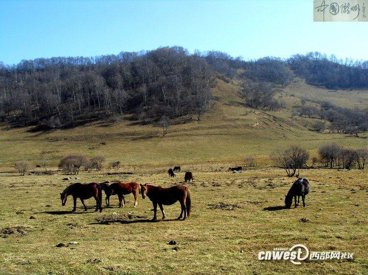 初冬的关山牧场