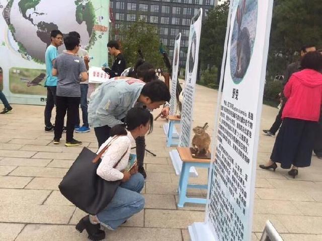 沣西新城举办野生动物保护宣传活动