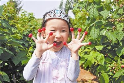 榆林6县区示范推广树莓200亩 亩收入可达1万元
