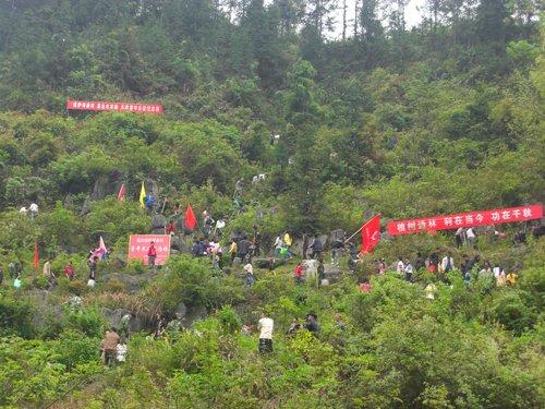 以绿衬红建设长征林 绿化长江保护母亲河