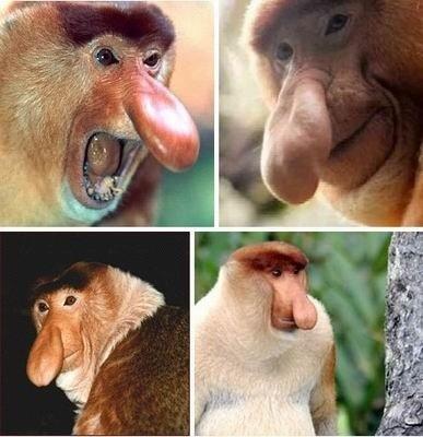 世界上13种最丑陋动物