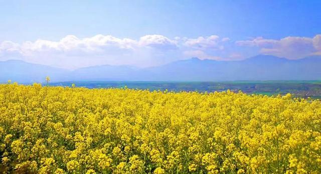 春满中国醉西安 长安区赏花季活动精彩纷呈