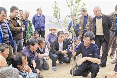 新思路破局佳县红枣产业僵局 每斤最高收5元