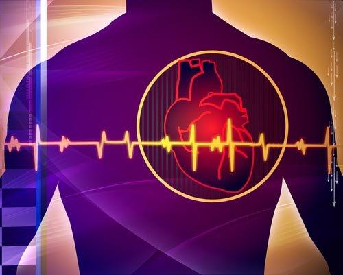 心脏的解剖学计算机模型,这项研究首次确认了电异质性和纤维结构在
