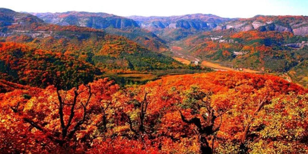 最美铜川 红叶美了整个秋!