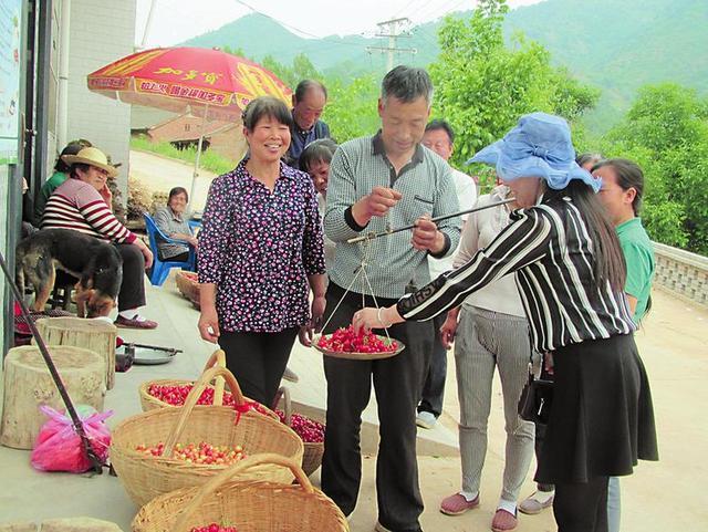 商州区沙河子镇喜迎樱桃成熟季(图)