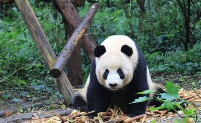 青城山——都江堰为什么是此生必游的目的地?