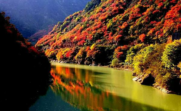 宝鸡这个景区将进入颜值巅峰期 最惊艳的秋天在这里