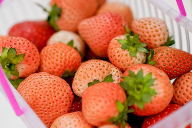 轻松舒适的亲子体验 铜川采摘草莓好去处