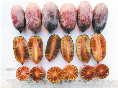 """张莹说:""""我的梦想就是培育出高抗高营养,口感极佳的有机彩色猕猴桃"""