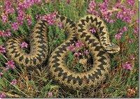 梦到花蛇预示着什么
