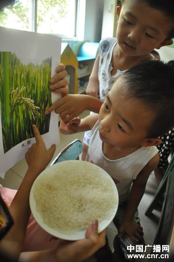 聊城市龙山双语幼儿园教几名小朋友认识大米与水稻的关系.(中广