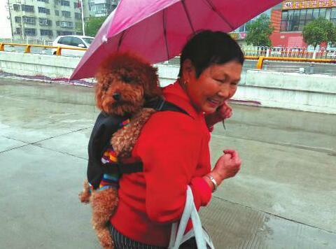 咸阳老人雨天打伞背着宠物狗逛早市