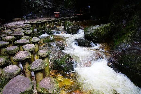 感受自然之神奇:牛背梁国家森林公园