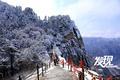 发现关中:西峰云海北峰雪松 记录春雪里的华山
