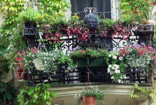 阳台摆放花卉植物的注意事项
