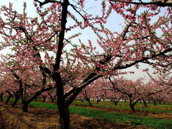 不用去普者黑 陕西也有媲美四海八荒的桃花林
