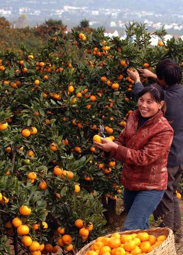 柑橘旅游文化节