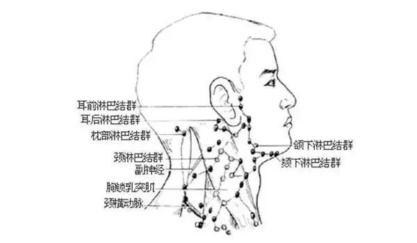 人体淋巴结分布�_只有当人体出现炎症,肿瘤等情况时,淋巴结才会增生肿大,甚至疼痛,用手