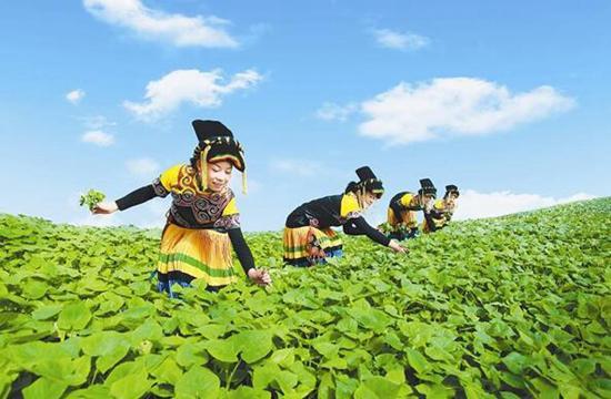 陕西人有口福啦 广西名特优农产品组团来西安