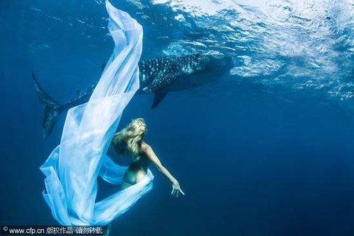 海底里最大的动物