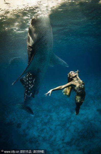 """海底""""美人鱼""""与鲸鲨绝美共舞"""