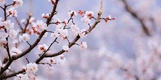第5期:离西安不远的杏花谷 免费游览还能咥美食