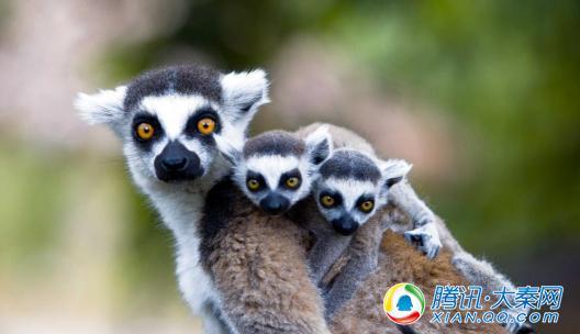 """来""""清爽榆林""""沙地避暑旅游月开放迷你动物园,带上孩子,和小动物来一次"""