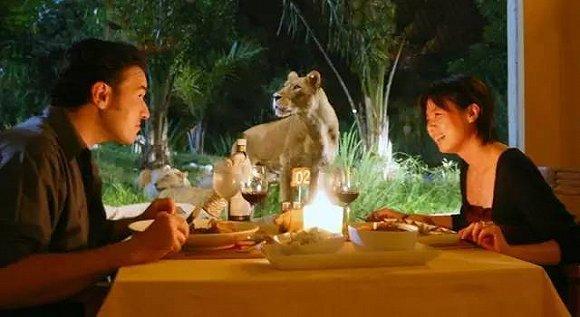 盘点全球24家动物主题酒店,带孩子一起住进疯狂动物城