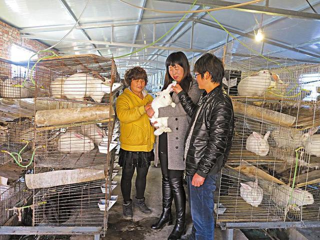 商洛三女子投资30多万办兔场 带动留守老人养兔