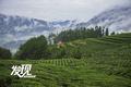 发现陕南:勉县春茶采摘季 高山万亩茶园飘香