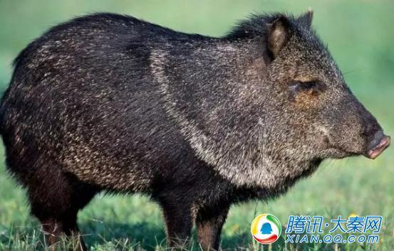 """""""清爽榆林""""来了一群呆萌动物 你认识几个"""