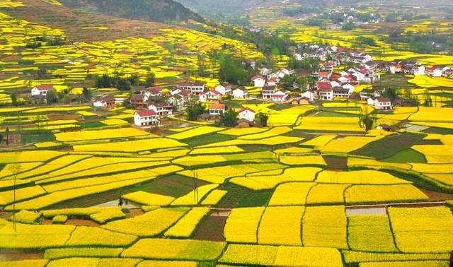 最美油菜花海汉中旅游文化节18日启动 经典线路公布