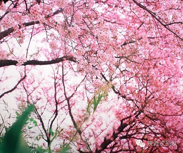 春天来桃花人面相映红 周末到陕西赏桃花全攻略