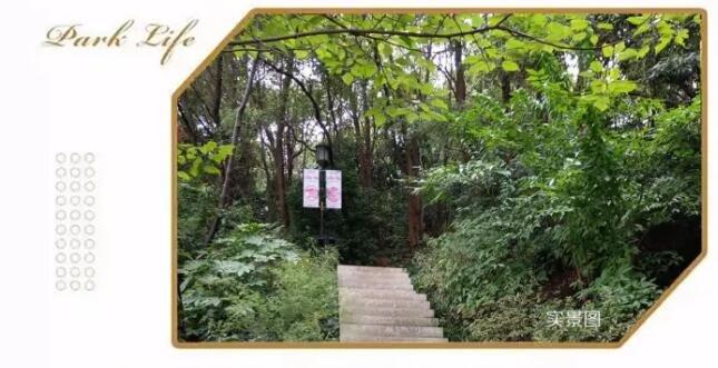 金芙蓉国际广场:藏于公园里的诗意栖居