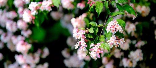 湘潭奥园冠军城 以最从容优雅的健康生活 礼谢最深爱的你