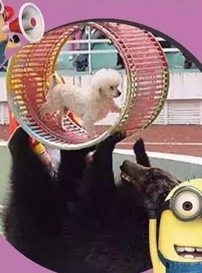 襄阳碧桂园首届国际马戏表演艺术节即将震撼来袭