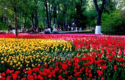 西宁要建自己的中央公园了